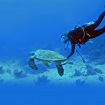 A guide to activities in the Paphos region